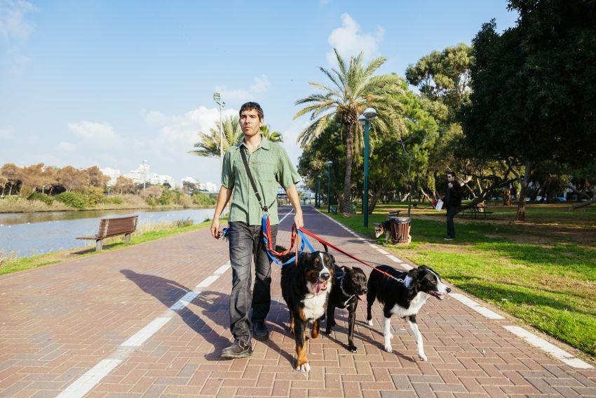 Dogwalker mit mehreren Hunden