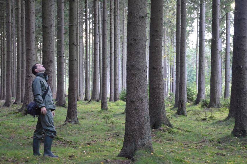 Förster im Wald