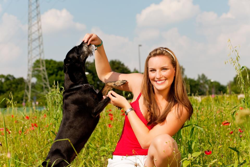 Frau spielt mit Hund auf Wiese