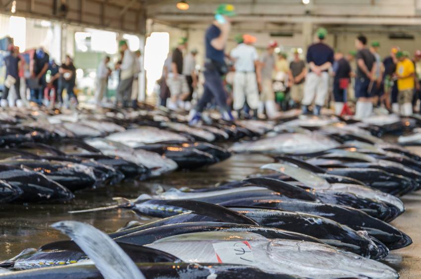 Grossmarkt Fischmarkt