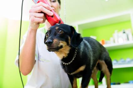 Frau mit Kehrmaschine im Hundesalon