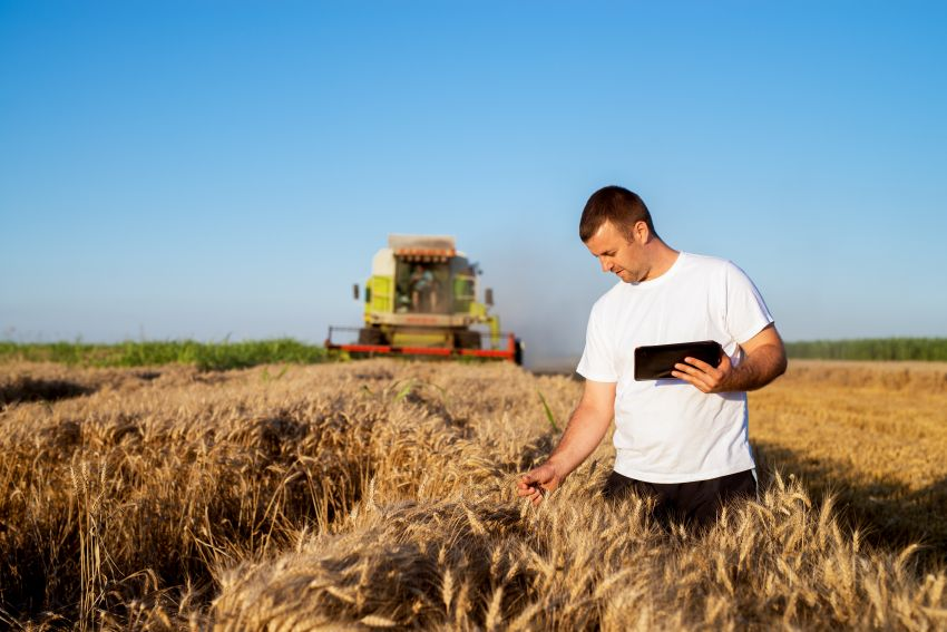 Landwirt kontrolliert Getreide