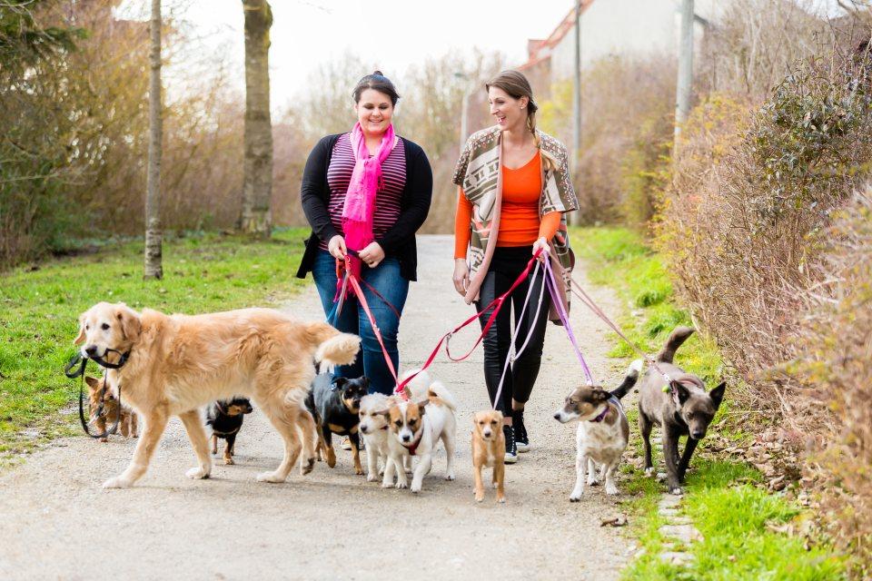 Frauen gehen mit Hunden gassi