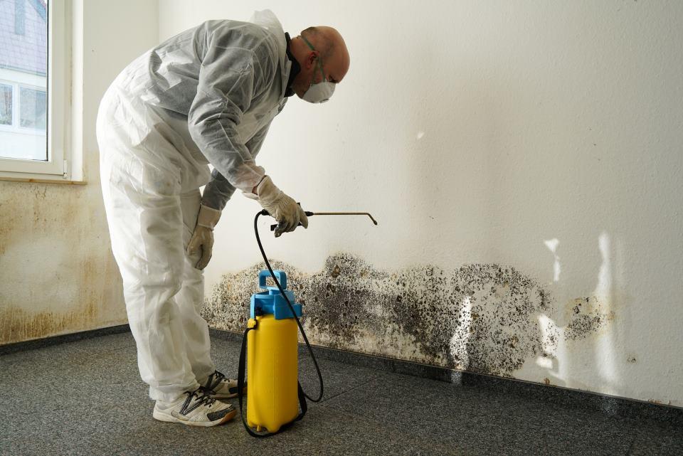 Handwerker bei der Behandlung von Schimmel an Wand